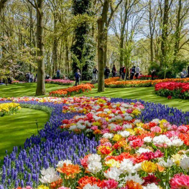 Tour - Campo de Tulipanes y jardines de Keukenhof